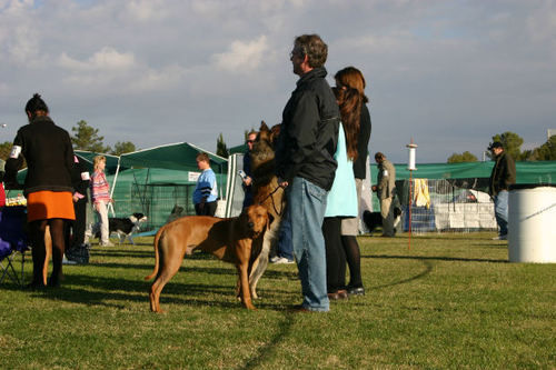 -- shows dogs events dog event people