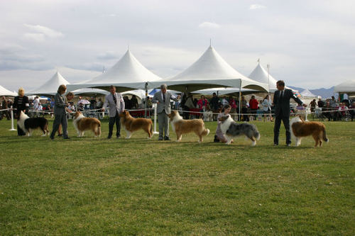 -- shows dogs collies events dog event people