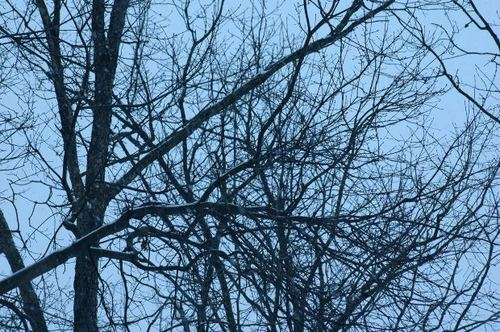 -- bare naked trees branch branches tree