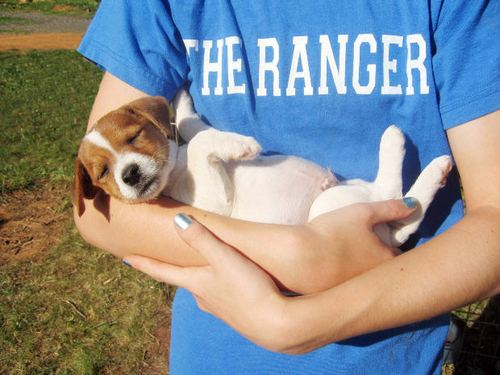 -- white grass nail jack jrt sleeping shirt sleep ranger baby brown hand