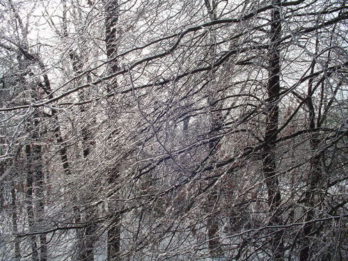 -- ice naked trees snowy snow cold branch winter stark branches frozen tree