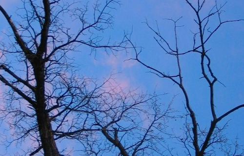 -- trunk limb dawn bare scenic naked sky sunrise trees trunks austere upward