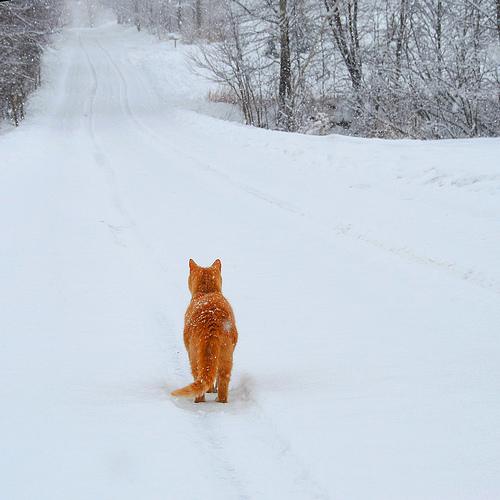 kočka ve sněhu vánoce a stromy